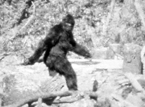 Patterson's Bigfoot photo... or is it just a guy in an ape suit?