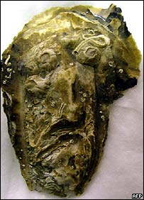 Oyster shell resembling the face of Jesus.