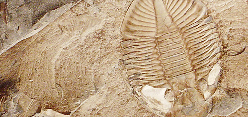 fossil image by Dave Dyet