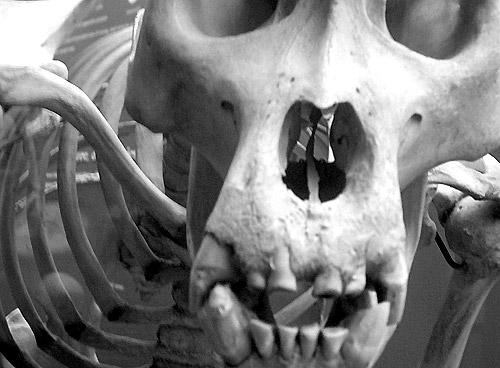 monkey bones photo by Jon Roobottom