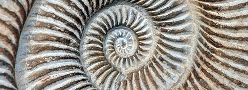 fossil image by Ross Brown