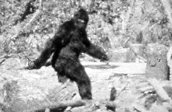 still from the Patterson-Gimlin film