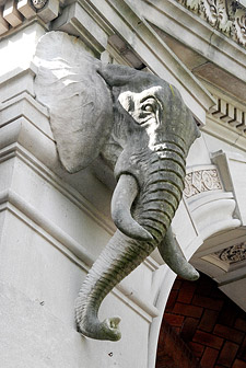 Knight's African Elephant head at the Bronx Zoo's Elephant House (copyrght Richard Milner)