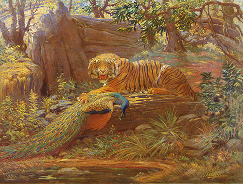 Knight's masterpiece of a snarling tiger with peacock (copyright Rhoda Knight Kalt)