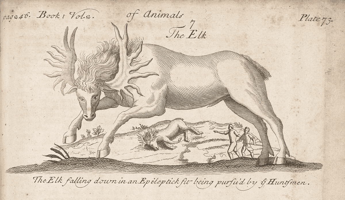 In a 1725 copper etching, huntsmen approach a moose felled by epilepsy.