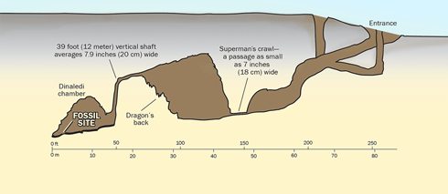 The Rising Star Cave System, showing access to the Dinaledi chamber. (Credit: Illustration by Pat Linse, based on image by National Geographic)