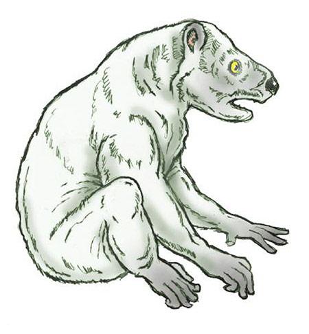 Megaladapis)