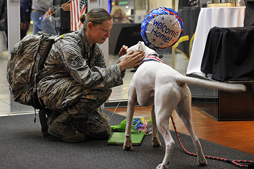 A richly detailed story-telling photograph. AI image recognition programs have difficulty interpreting it beyond recognizing that it contains a dog. (Credit: U.S. Air Force photo by Airman 1st Class Erica Crossen)