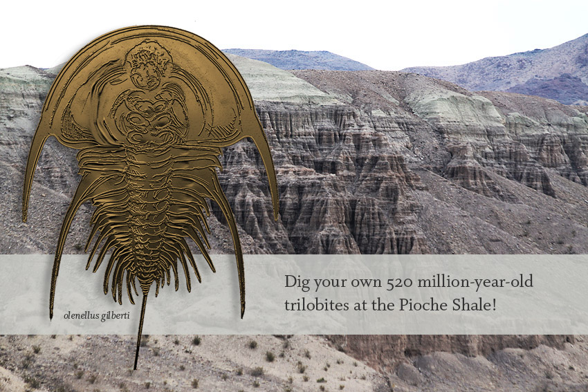 Collect your own fossils! We will stop at the Pioche Shale, Oak Springs Summit near Caliente, Nevada to collect trilobites.