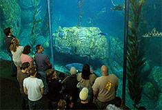 Blue Cavern exhibit at the Aquarium of the Pacific