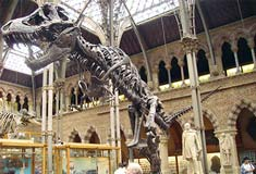 Stan (Tyrannosaurus rex) cast at the Oxford University Museum of Natural History, by Ballista at the English language Wikipedia [GFDL or CC-BY-SA-3.0], via Wikimedia Commons