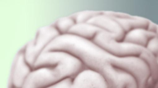 brain-myth