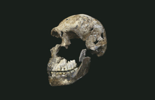 The skull of Homo naledi, named Neo (Credit: Wits University/John Hawks).