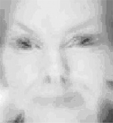 FIGURE 6: A mother's face as it might be seen by a newborn (processed to represent a contrast sensitivity of 3 cycles degrees when viewed at a visual angle of 50°, with simulated radial astigmatism and an extremely shallow (1 cm) depth of focus.
